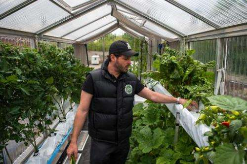 Nicolas Leschke, CEO and founder of ECF Farm Systems, checks his crops at a green house built on a shipping container by the ECF