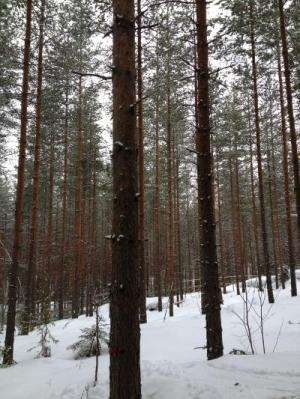 Pine forest particles appear out of thin air, influence climate