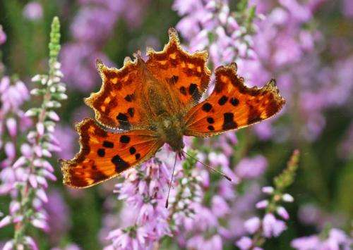 Population stability 'hope' in species' response to climate change