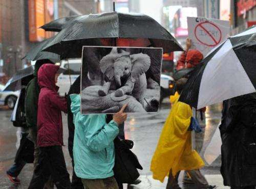 Protesters march across 42nd Street during the official Global March for Elephants and Rhinos rally in New York on October 4, 20