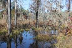 Report finds protecting natural areas makes good fiscal sense