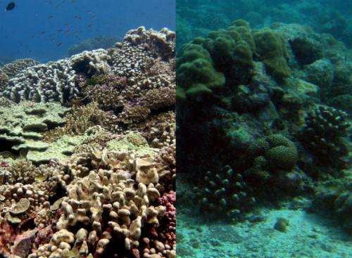 Rethinking the reef