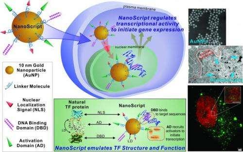 Rutgers Chemistry's Ki-Bum Lee patents technology to advance stem cell therapeutics