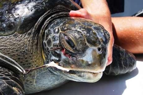 Satellite tags, fishing data reveal turtle danger zones