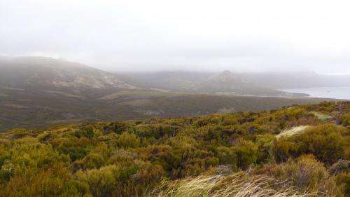 Shrub growth decreases as winter temperatures fluctuate up