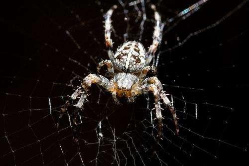 Spider silk ties scientists up in knots