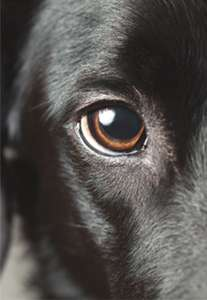Spotting Eye Problems in Pets
