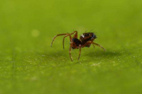 Students on field course bag new spider species