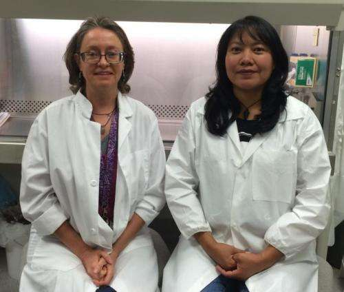 Study may help explain link between uranium exposure and skin cancer