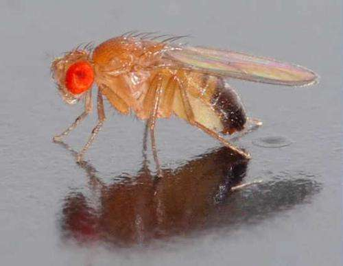 Study of complete RNA collection of fruit fly uncovers unprecedented complexity