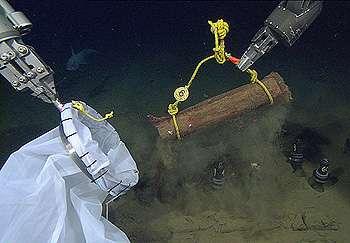 Sunken logs create new worlds for seafloor animals