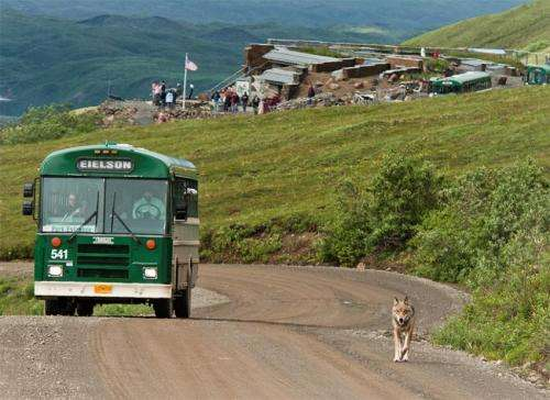 Wolf mother deaths threaten pack survival but not population