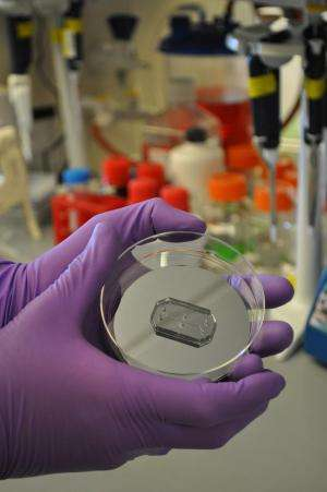 Wyss Institute's technology translation engine launches 'Organs-on-Chips' company