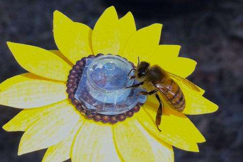 Researchers discover bees are picky pollinators