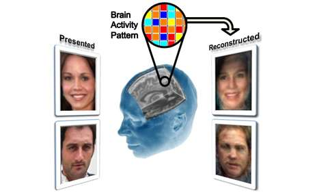 Researchers reconstruct facial images locked in a viewer's mind