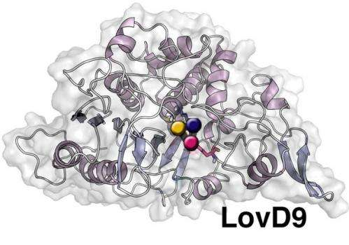Scientists reveal structural secrets of enzyme used to make popular anti-cholesterol drug