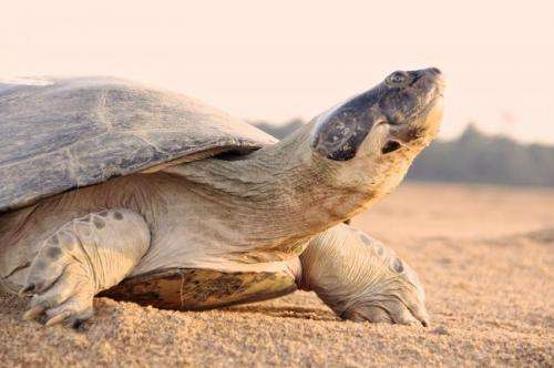 Scientists study 'talking' turtles in Brazilian Amazon