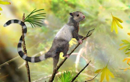 Researchers discover 3 extinct squirrel-like species