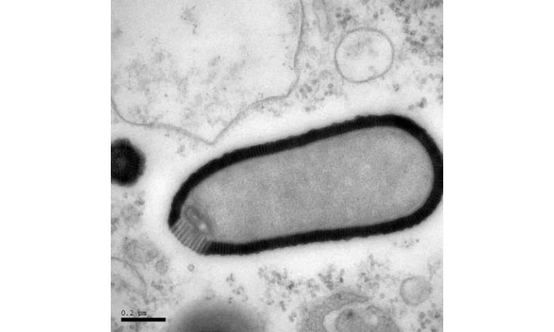 30,000-year-old virus from permafrost is reborn