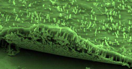 Researchers improve performance of III-V nanowire solar cells on graphene