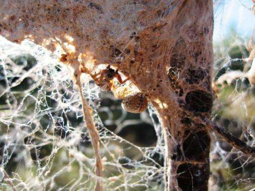 Spider personality study shows evidence of 'social niche specialization'