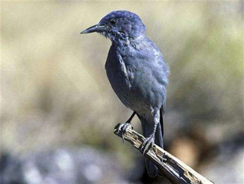 Climate changes to result in bird, reptile shifts (Update)