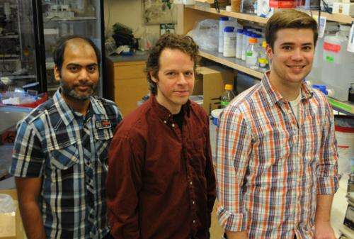 Researchers show fruit flies have latent bioluminescence