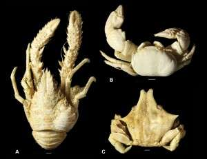 180 million years of parasitic infestation in crustaceans