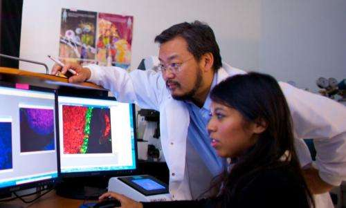 Study reveals protective role for specialized cells in intestinal and respiratory systems