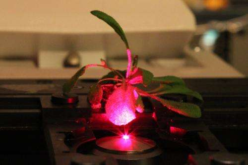 Bionic plants