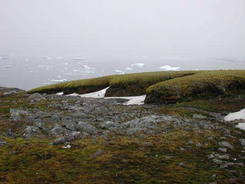 Antarctic moss lives after 1,500+ years under ice