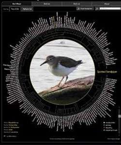 Computer science professor builds web app for bird identification