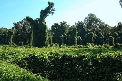 Dispersal patterns key to invasive species' success