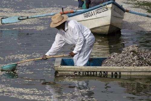 """Fishermen collect dead """"popocha"""" fish at the Cajititlan lagoon in Tlajomulco de Zuniga in Jalisco State, western Mexic"""