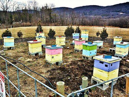 Honeybees show tipping points