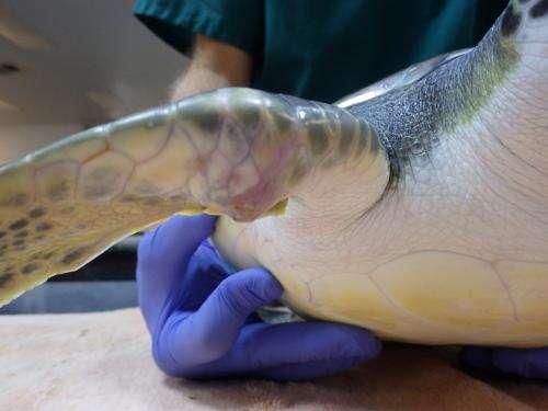 Injured Sea Turtle? Just Print a Splint!