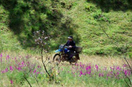 In this undated photo, a farmer is seen riding past the purple-flowering plant, known as the 'Darling Pea', in the bushfire-scar