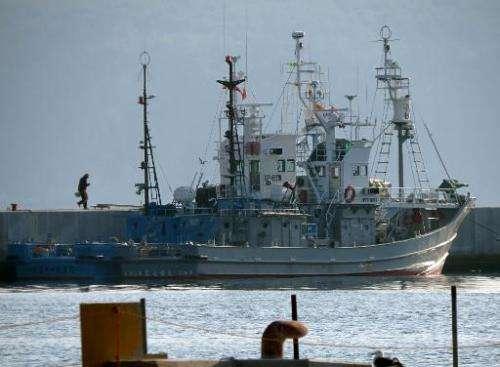 Japanese whaling ships are anchored at Ayukawa port in Ishinomaki, on April 25, 2014