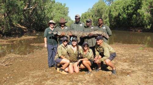 Kimberley survey nets plenty of crocs