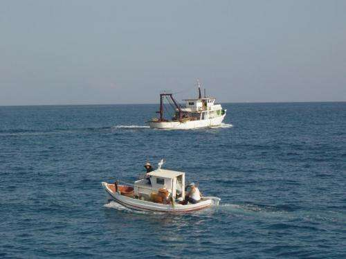 Mediterranean fish stocks show steady decline