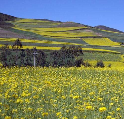 New research links global crop data in climate change model accounting for emissions mitigation