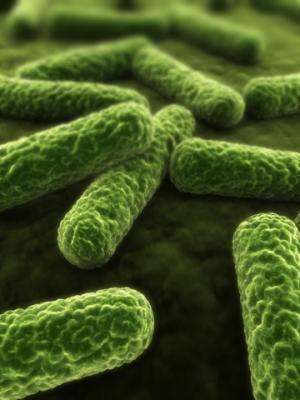 New understanding of how bacteria build their protective cell wall