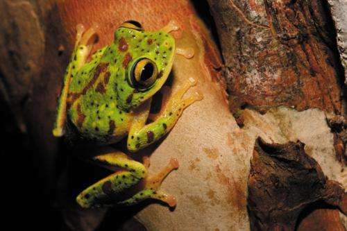 Researcher reveals how amphibians crossed continents