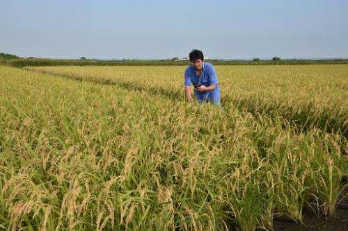 Rice farmer Shuichi Yokota checks the growth conditions of his rice with a smartphone in Ryugasaki, Ibaraki prefecture, on Augus