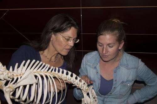 Running for life: How speed restricts evolutionary change of the vertebral column