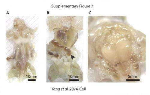 See-through organs and bodies will accelerate biomedical discoveries