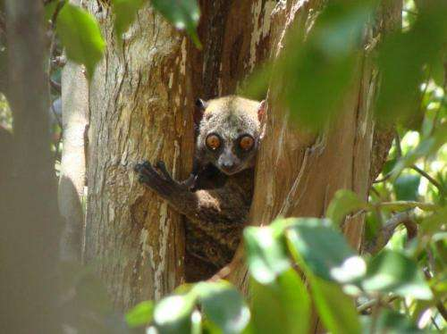 Selective logging takes its toll on mammals, amphibians