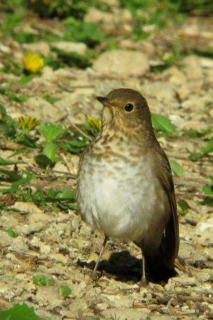 Study provides insights into birds' migration routes