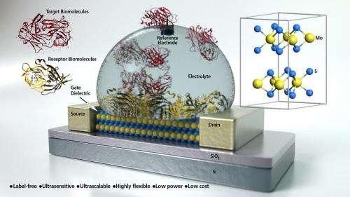 UCSB researchers develop ultra sensitive biosensor from molybdenite semiconductor