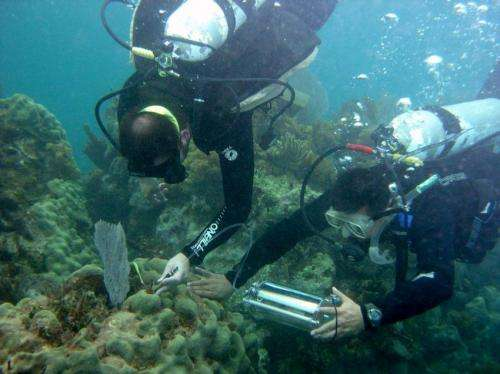 UGA ecologists provide close-up of coral bleaching event